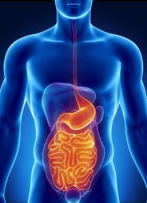 human-gut