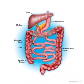 Anatomy of the Digestive Track