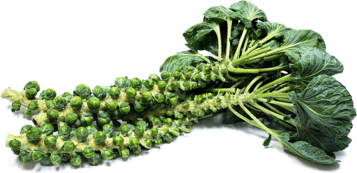 sprouts on stem